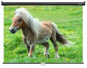 Экран Digis Optimal-C DSOC-1101 160x160cm