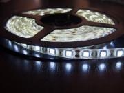 Светодиодная лента MTF Light 5050SMD 12V 36W 5m IP65 White