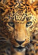 """Фотообои Decoretto """"Леопард"""", 180 х 254 см"""