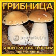 Белый гриб классический, субстратный мицелий (грибница)
