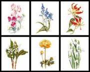 Thea Gouverneur Набор для вышивания Шесть цветочных исследований 6...
