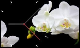 настенные часы Time2Go 1015 Орхидеи