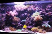 Оформление рифового аквариума 501-700 л