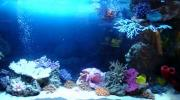 Оформление морского аквариума 401-500 л