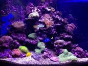 Оформление рифового аквариума 701-900 л