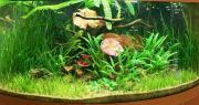 Оформление пресноводного аквариума с живыми растениями 101-200 л