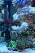 Оформление рифового аквариума 201-300 л