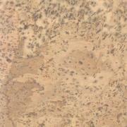 Пробковый пол Corksribas E-cork 905х295х10,5 мм Item №13