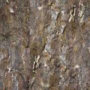 Пробковый пол Corkstyle (Коркстайл) Fantasy Fossil 915 x 305 x 6 мм (клеевой) предлакировка
