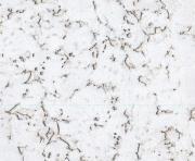 Настенная клеевая пробка Corksribas, DECORK, Condor Snow (600х300х3 мм) упак. 1,98 м2