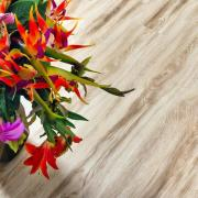 Напольные покрытия Каменно-полимерная плитка Alpine Floor - Real Wood Клен Канадский