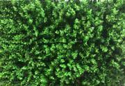 Искусственный газон-коврик вьющийся