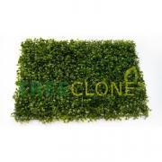 Искусственный газон-коврик из самшита