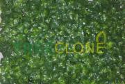 Искусственный газон-коврик из широких листочков