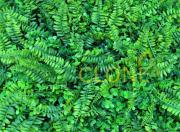 Искусственный газон-коврик Папоротник