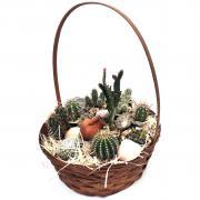 ? Кактусы: Подарочный набор из 10 кактусов