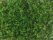 Искусственный газон-коврик самшит премиум