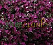 Искусственный газон-коврик Вьюнок темно-фиолетовый