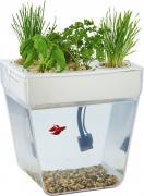 Назад к истокам Набор для выращивания растений и уходу за рыбкой Акваферма