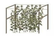 Опора для малины Зеленая (150*50*2 см) Комплект - 2 шт