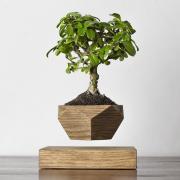 Левитирующее растение Бонсай (темный)