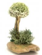 Миниатюрный бонсай с цетрарией (18 см)