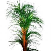 195см Treeclone (Россия) Искусственное дерево Драцена Дрим