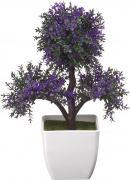 Бонсай Engard, B54-purple