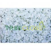 Панно свадебное из белых цветков гортензии