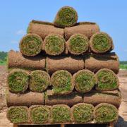 Рулонный газон Элитный - стандартный рулон