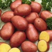 Картофель Potato Red Fantasy