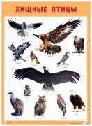 Плакат Хищные птицы 50Х70