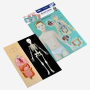Магнитная игра «Анатомия»