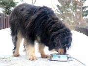 Миска с подогревом Feed-Ex для собак и других домашних животных