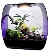 Террариум для рептилий Lucky Reptile Life Box, фиолетовый, 35 x 35 x 20 см