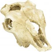 "LUCKY REPTILE Декорация для террариума, череп ""Skull Cow"""