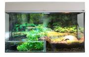 Палюдариум для рептилий Lucky Reptile Стартовый комплект для Амфибий, белый, 50x40x28 см