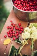 Шиповник, ягода сушёная